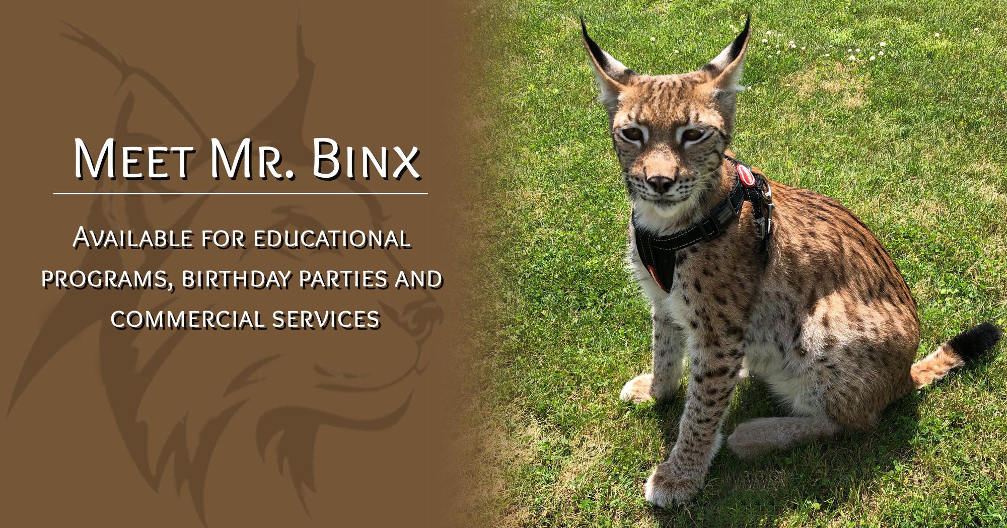 Meet Mr. Binx